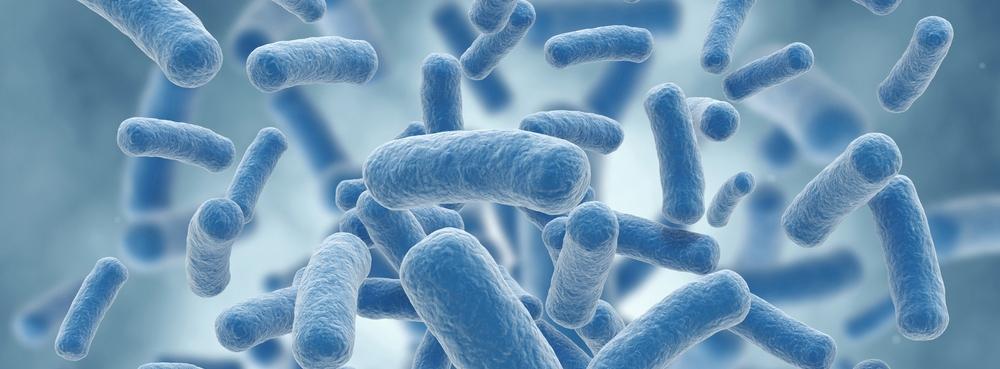 bacteria image